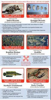 Aquatics_Wallet_Card_2015-e1476221017448