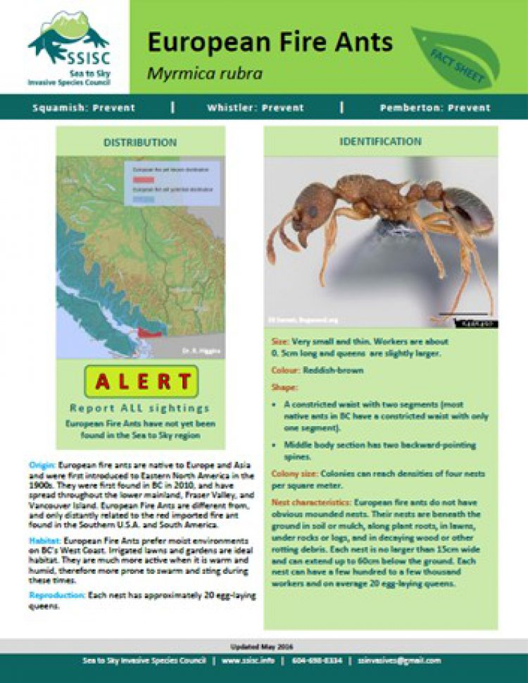 New: European Fire Ant ALERT sheet