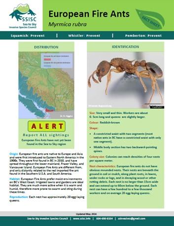 New: European Fire Ant ALERT sheet