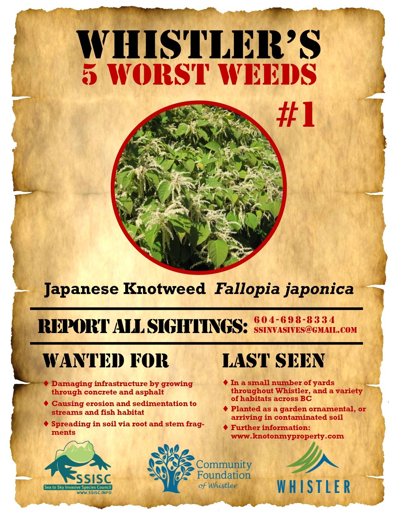 Whistlers-5-Worst-Weeds-Japanese-Knotweed