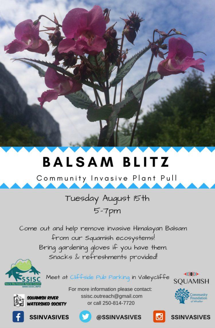 Balsam Blitz!