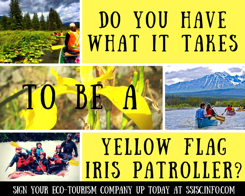 Yellow Flag Iris Patrol 2017