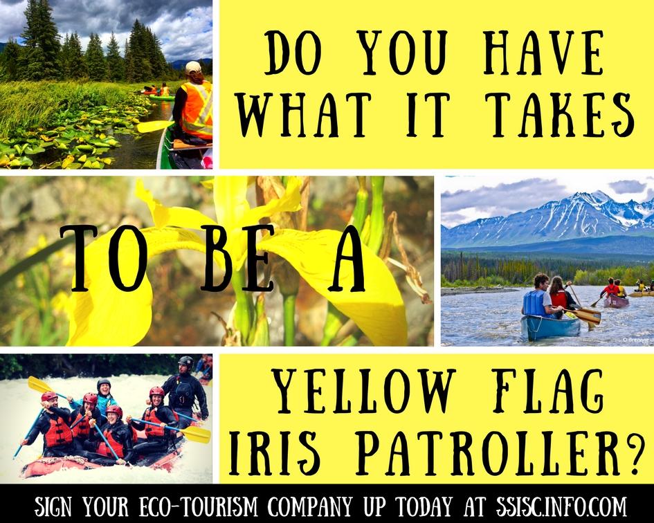 Yellow Flag Iris Patrol 2017