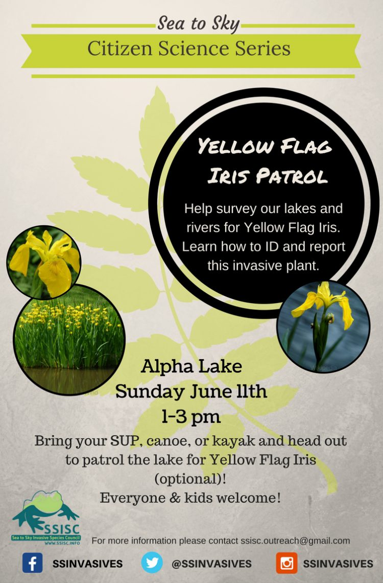 Yellow Flag Iris Patrol