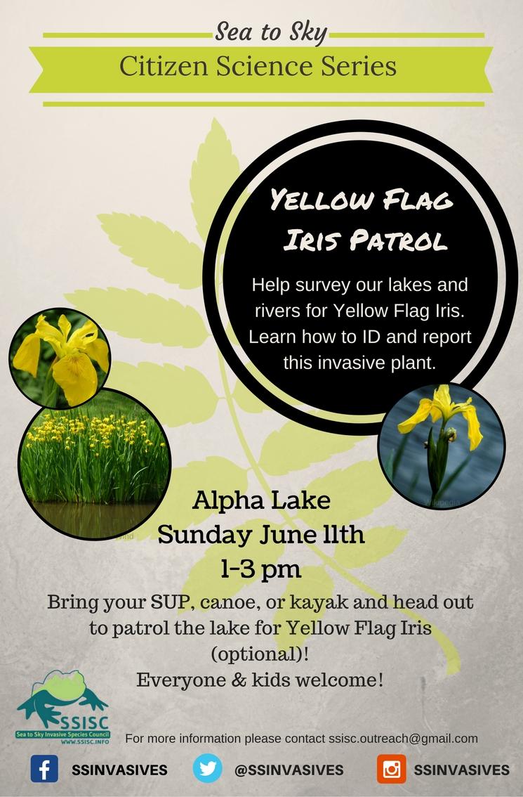 Yellow Flag Iris Patrol