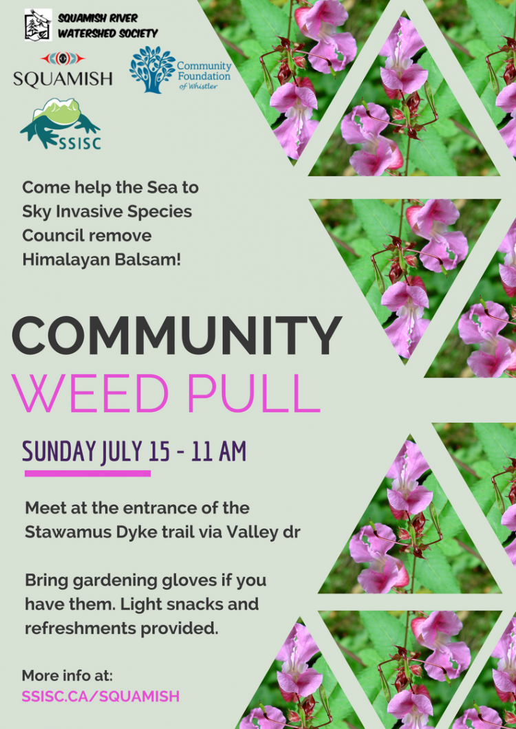 Squamish Community Weed Pull
