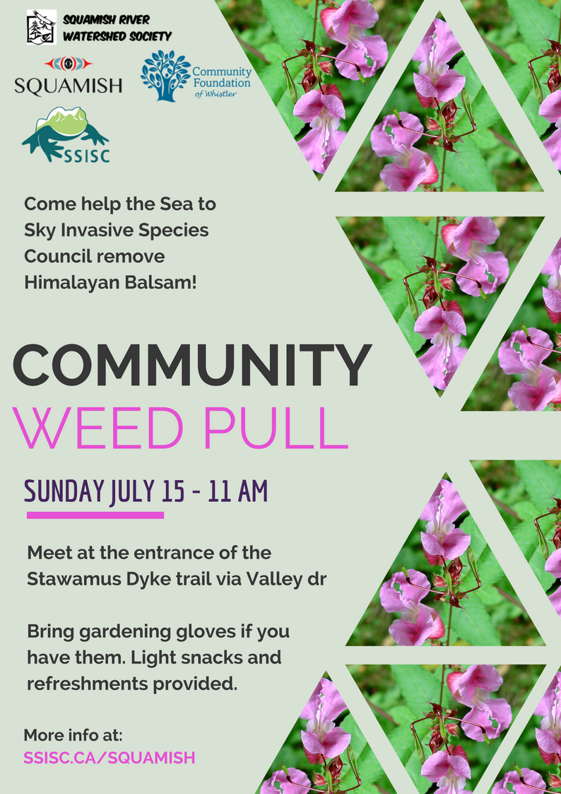 Squamish Community Weed Pull