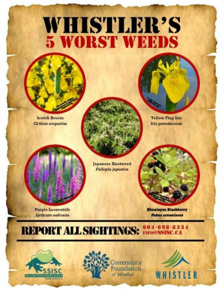 Wanted: Whistler's Five Worst Weeds