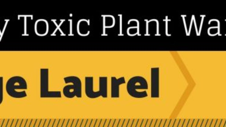 Spurge Laurel: Proceed with Caution