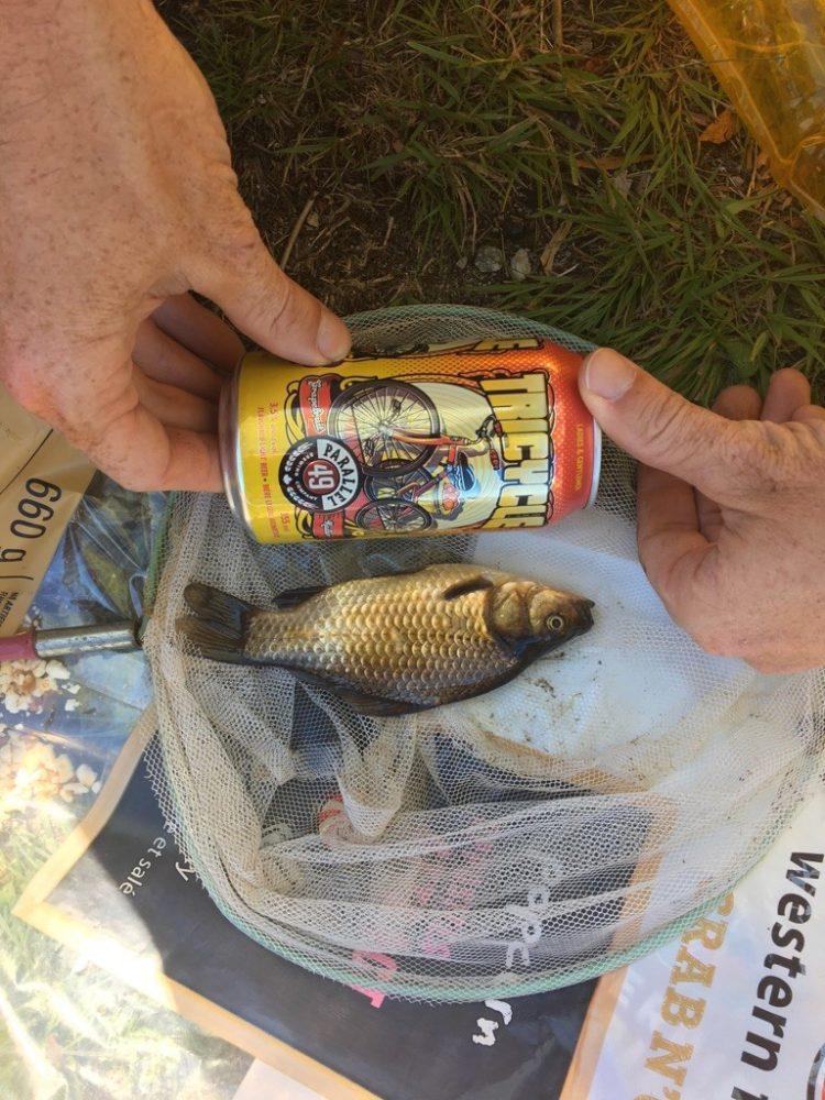 Goldfish Infestation in Pinecrest Lake