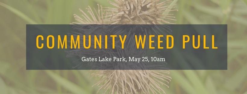 Gates Lake Weed Pull