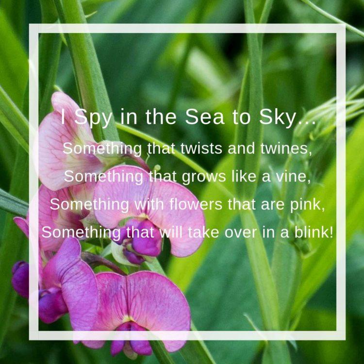 I Spy in the Sea to Sky…