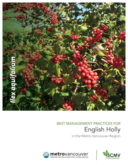 English-Holly-BMP-Cover