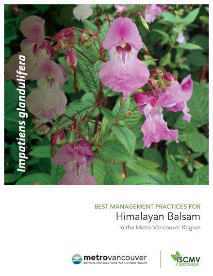 Himalayan-Balsam-BMP-cover