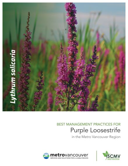 Purple-Loosestrife-BMP-cover
