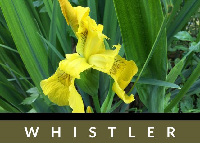 Whistler-ButtonYFI