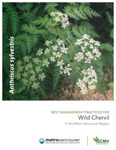 Wild-Chervil-BMP-cover