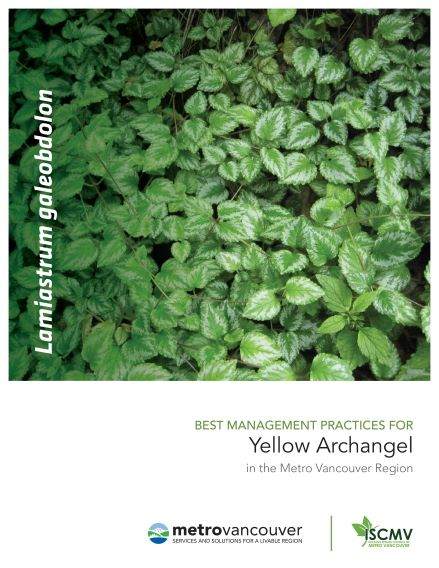 Yellow-Archangel-BMP-cover