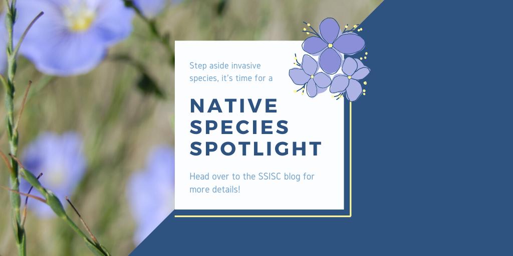 Native Species Spotlight