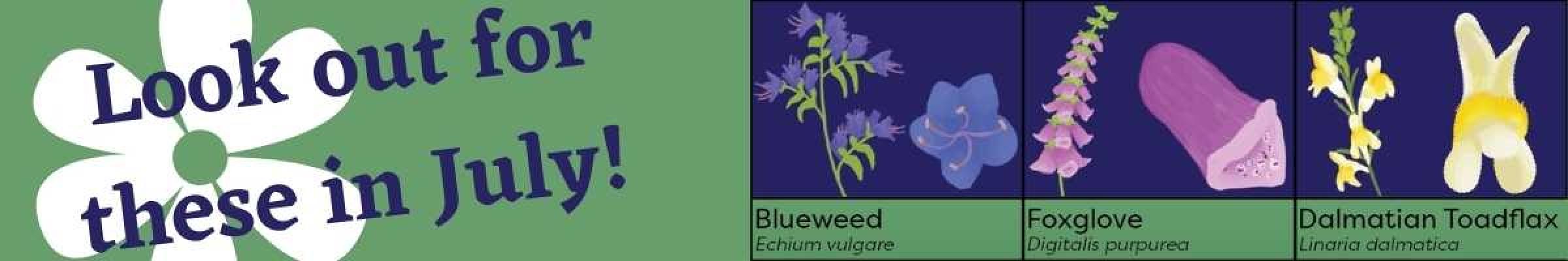 July Flowering Times website banner