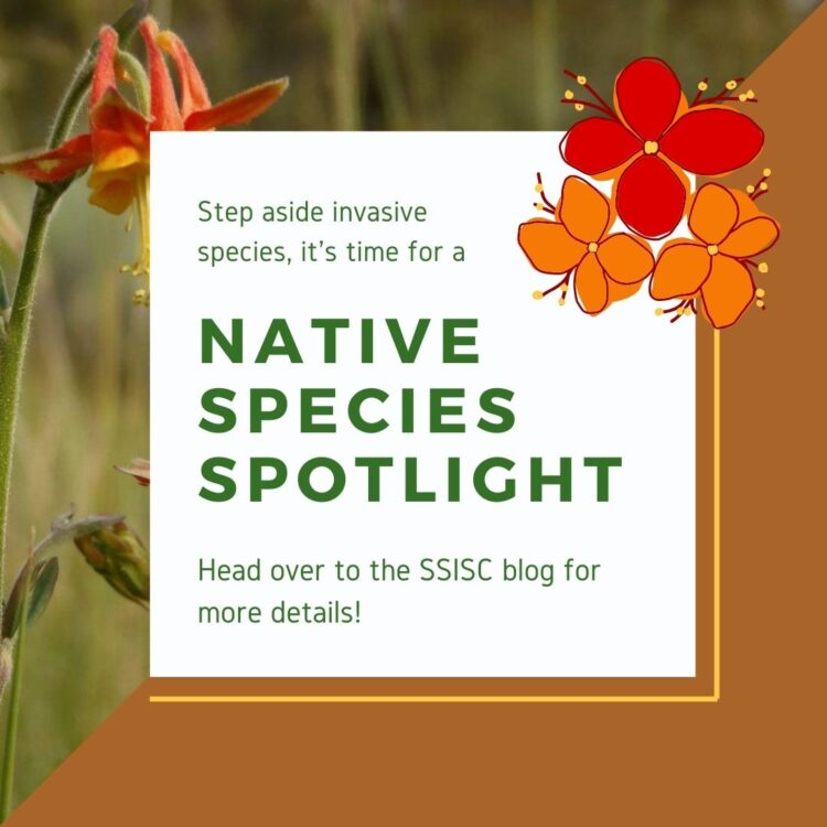 Native Species Spotlight