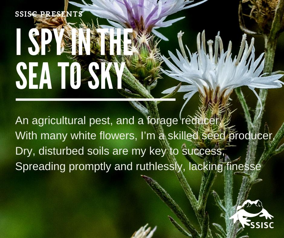 I Spy in the Sea to Sky!