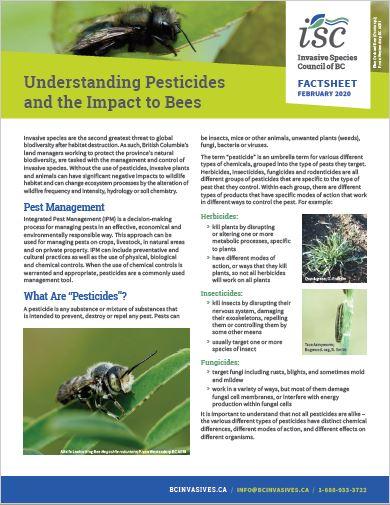 Bees_pesticides_thumb