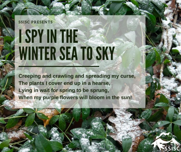 I Spy in the Winter Sea to Sky!