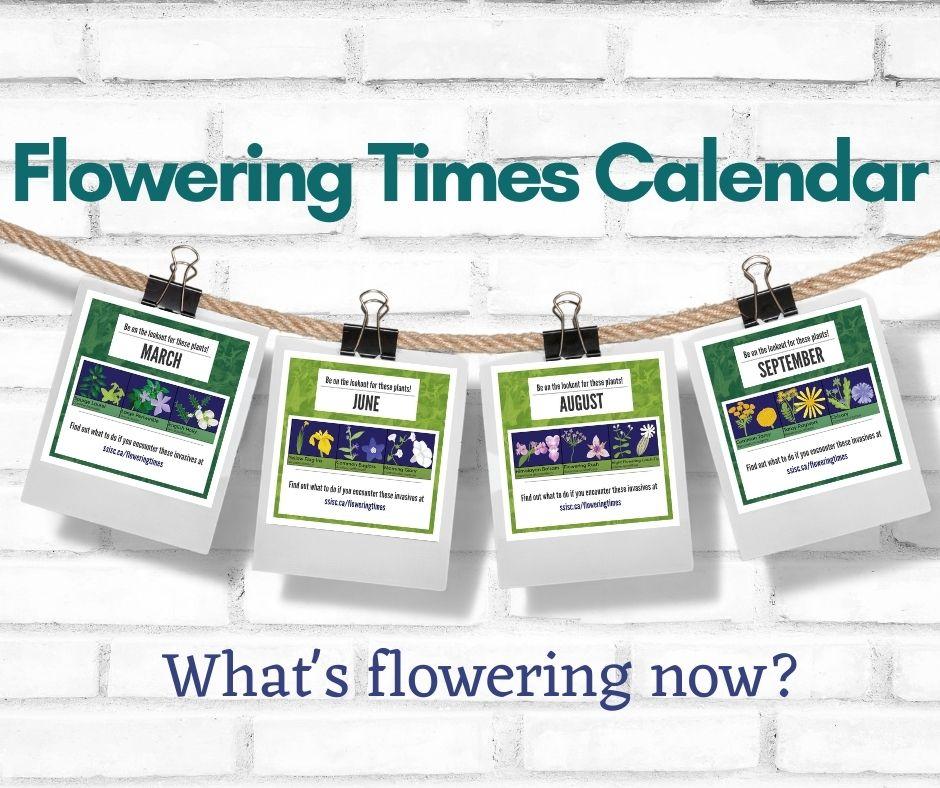Flowering-Times-Calendar-for-website