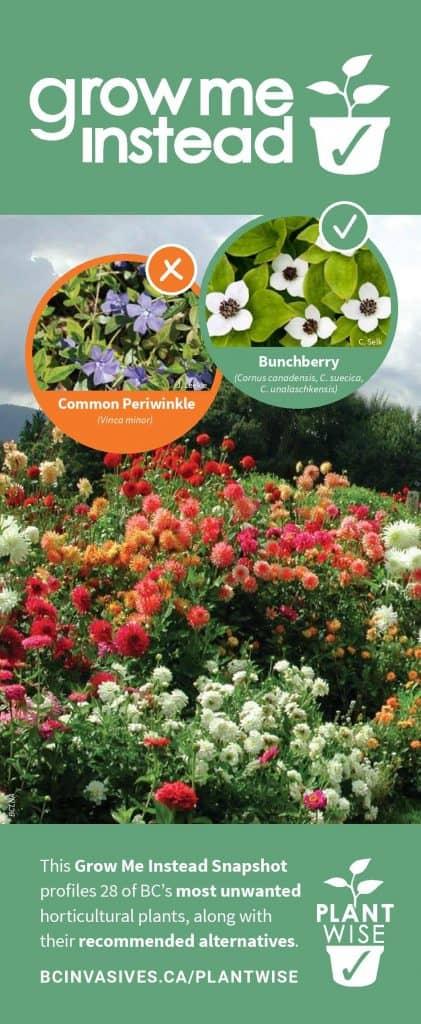 PlantWise Grow Me Instead Brochure 2021